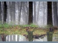 6a. ghost-trees.jpg
