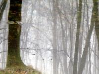 6b. tree-ring.jpg