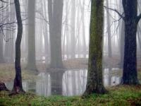 6c. water-woods.jpg