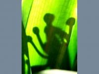 plant-spirit.jpg