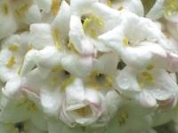 white-face-2.jpg
