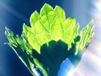 rainbow_leaf.jpg